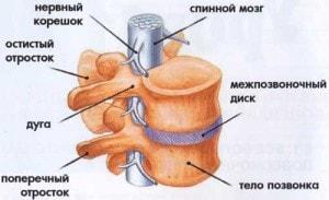 osteohondroz-anatomiya